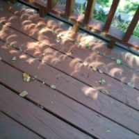 2017 solar eclipse crescents through the leaves - Ron Woods